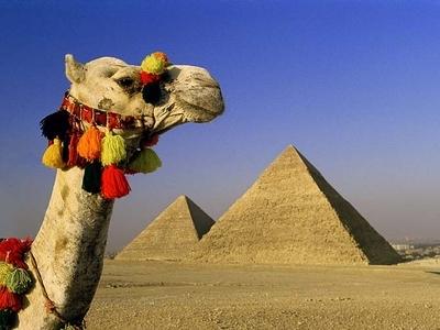 Egypt Great Pyramid Camel