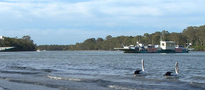 The Tewantin-North Shore Ferries And Two Pelicans