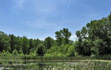 University Hills Park Pond, College Park, MD
