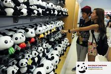 Chengdu Panda Volunteer2