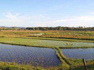 Coastal Plains Between Sihanoukville And Ream