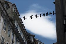 Pedro Pina Vasconcelos Lisbon Photographer Birds