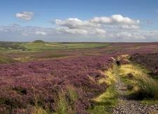 Heather Moorland, North York Moors