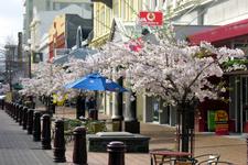 Spring In Esk Street Invercargill