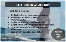 Boat Based Whale Trip