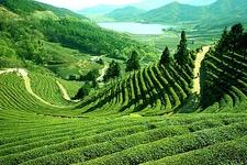 Darjeeling Vandana Travels1