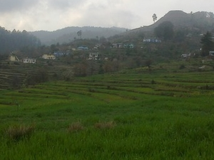 Dhakna Badola