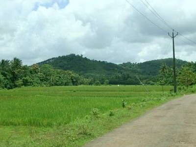 Road In Cheriyoor Through Paddy Fields