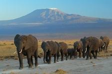 Elephants Arusha National Park