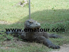 Komodo Tours And Travel