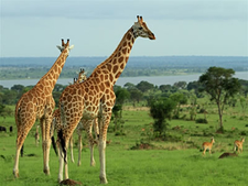 Akagera Wildlife Rwanda