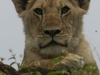 Anbieter Fr Safaris In Kenia Deutschsprachig
