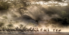Anual Migration-arend Safaris-serengeti