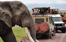 Elephant Crossing 30 Opt 2