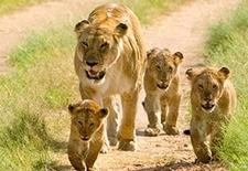 Kenya Tanzania Wildlife Tour