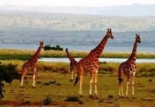 Kenya Wildlife Package