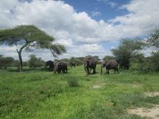 Elephants In Ngorongoro