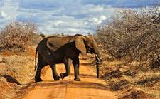 Tanzania Elephant Crossing