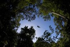 Tsitsikamma Canopy Tours 31