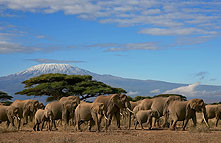 Amboseli National Park 037
