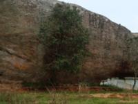 Bilikal Rangaswamy Betta