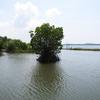 Mangroves In Ezhom