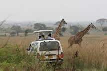 Nairobi Park Game Viewing