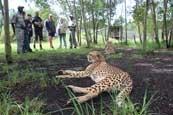 Tenikwa Wild Cat Experience