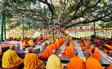 The Tree Bodhgaya