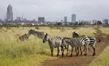 Zebras Nairobi Park Game Viewing
