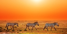 04 Tanzania Migration Photo Shutter Michal Bednarek Copy Copy