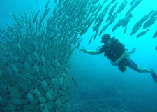 Diver Interacts With Schooling Fish