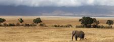 Ngorongoro Crater1 Photo Copy Copy