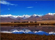 North Tibet Grassland