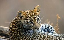 South Africa Safari Sabi Sands Jpg 1340x0 Default