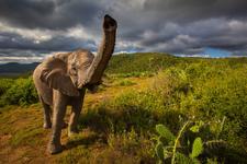 South Africa Wildlife 19 X3