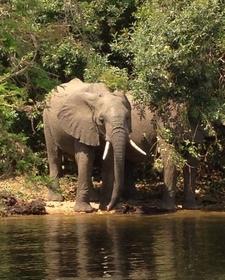 Elephants Mfnp