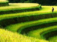 Ha Giang Northeast Vietnam