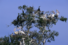Prek Toal Bird Sanctuary 16032501 700pixel