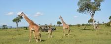 Slider Giraf Original