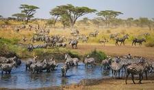 02tpio Im9002 Serengeti Pioneer Camp 900