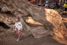 A Girl In Ta Prohm Temple