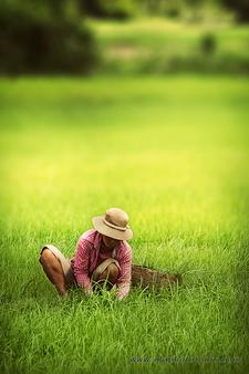 Woman In Rice Field
