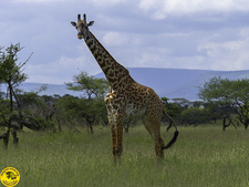 National Park Arusha