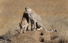 Serengeti National Park 015