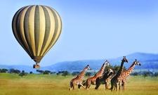 Tanzania Wild Life