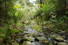Auckland Rainforest