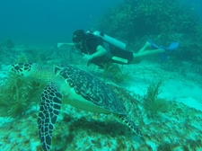 Cancun Diving 2