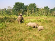 Chitwan Jungle Safari1