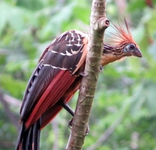 Amazon Explorer Iquitos Peru Expeditions Tours Adventure, Birds In The Jungle